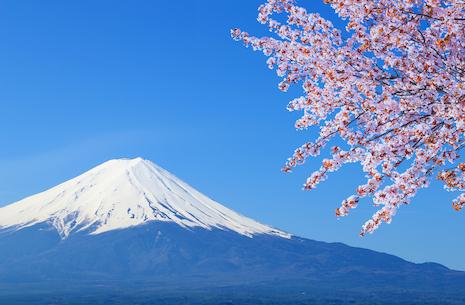 Aflyst: Sakura
